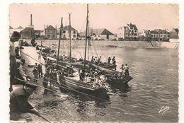 Quiberon  -Bateaux Sardiniers A  Port Maria -  CPSM° - Quiberon