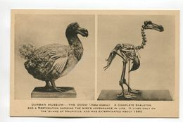 The Dodo Durban Museum - South Africa