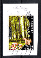 Italia   -   2011.  Funghi E Scoiattoli Nella Foresta. Mushrooms And Squirrels In The Forest. - Vegetazione