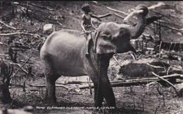 ASIE--SRI LANKA---CEYLON--tame Elephant Clearing Jungle--voir 2 Scans - Sri Lanka (Ceylon)