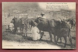 THIEZAC - La Traite Des Vaches - France