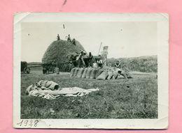 PHOTOGRAPHIE - PHOTO  :  AGRICULTURE - SCENE DE BATTAGE / MOISSON / FENAISON :  BATTEUSE MERLIN - ( CLICHE DATE 1928 ) 1 - Métiers