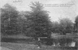Saint Cloud Colorisée Marmuse Cèdres Plantés Par Marie Antoinette Arbres Bois - Saint Cloud