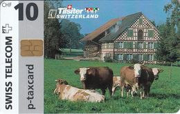 Tilsiter - Switzerland