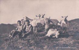 Im Speicher, Hochalpgrat, Chèvres Et Chevriers (1407) - Elevage
