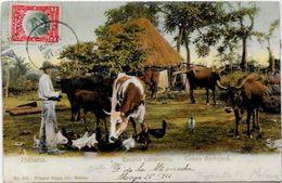 CPA Cuba Circulé Métier Type - Cartes Postales