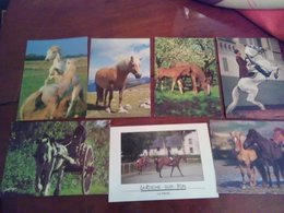 Lot De 700 Cartes Cpm Theme Chevaux - Cartes Postales