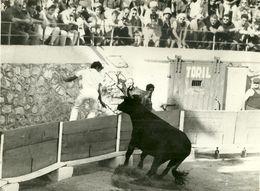 13 MOURIES PHOTOGRAPHIE DE PRESSE 1966 TAUREAU GITAN MANADE LAFONT RAZETEUR MARCHAND COCARDE COURSE LIBRE PROVENCE - Places