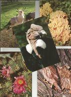 5 CART. ANIMALI / F. MOTTA EDITORE MILANO  (134) - Animals