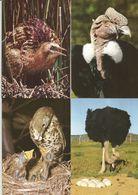 4 CART. ANIMALI / F. MOTTA EDITORE MILANO  (136) - Animals