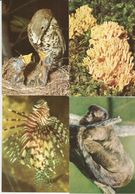4 CART. ANIMALI / F. MOTTA EDITORE MILANO  (137) - Animals