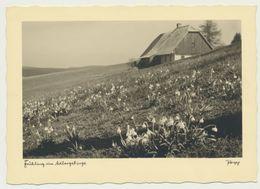 AK  Frühling Im Adlergebirge Popp - Tchéquie