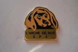 20180221-1416 SPA « L'ARCHE DE NOE » BELFORT - Animaux