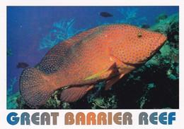 Postcard Great Barrier Reef Coral Cod [ By Peer ] PU 1997 My Ref  B22324 - Great Barrier Reef