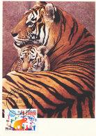 D32828 CARTE MAXIMUM CARD FD 2002 NETHERLANDS - CIRCUS TIGER - DETAIL ON STAMP CP ORIGINAL - Big Cats (cats Of Prey)