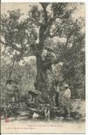 LEVEE Du LIEGE Dans Les MAURES...VAR..  8 Personnages En Action , Dont  3 Dans L'arbre...RARE  Très Belle  En1909... - France