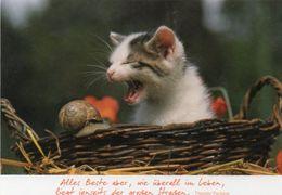 Kätzchen Und Schnecke - Katzen