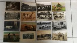 Beau Lot De 30 CPA Thème Agriculture / Agricole / Paysans / Fermier / Attelage - Postcards