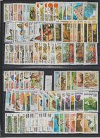 CAMBODGE  ANNEE 1998   Total 17 Séries Complètes  **MNH    Réf CAM 98 - Cambodia
