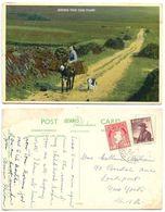 Ireland 1957 Postcard Going For The Turf - Donkey & Dog, Scott 107 & 159 - Ireland