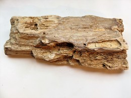 Bois Fossile Silicifié - Fossils