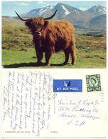 Great Britain 1970 Postcard Highland Cattle, Edinburgh To U.S., Scottish Regional 9p. Stamp - Cows