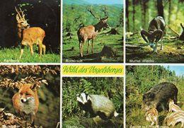 Wild Des Vogelberges - Rehbock, Rothirsch, Mufflon, Rotfuchs, Dachs, Wildschweine - Tierwelt & Fauna