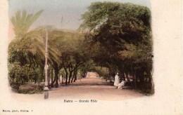 Algérie - BISKRA  Grande Allée - Biskra