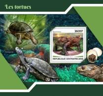Central Africa 2017 Turtle - Centrafricaine (République)