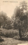 CONAKRY - Paysage à Camayenne - Equatorial Guinea