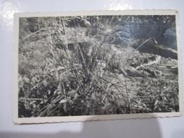 CPSM  CAMEROUN Moyen-Congo, Caiman Au Milieu Des Papyrus Sur Les Bords De La Rivière Loémé,   T.B.E. - Animaux & Faune