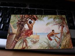 South Pacific Papuans On Coconut Palm Tree Vintage PC - Océanie