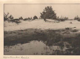 Kalmthout ,Calmpthout ,  Kalmthoutse , Duinen , (groot Format ) - Kalmthout