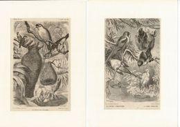 12 Gravures Sur Bois Extraites De La Vie Des Animaux De A.E. BREHM 1878 Les OISEAUX. Format Du Support 21/29,7cm. Lot 1 - Prenten & Gravure