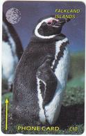 Falkland Islands  Phonecard- Magellanic Penguin - Fine Used - Falkland Islands