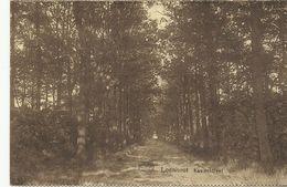 Loenhout Kasteeldreef     (7928) - Wuustwezel