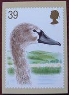 G263 - 5 Cartes Anglaises Reproduisant Les Timbres Oiseaux (cygnes) De 1993 - Swans