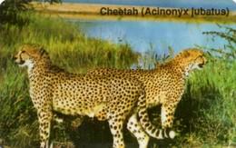 *NAMIBIA* -  Scheda Usata - Namibia