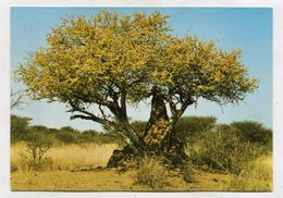 NAMIBIA - AK 316912 Blühender Busch Mit Termitenhügel - Namibia