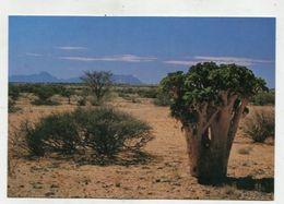 NAMIBIA - AK 316913 Zwischen Spitzkoppe Und Brandberg - Namibia