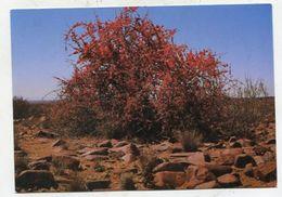 NAMIBIA - AK 316916 Blühender Flügelfruchtstrauch - Namibia