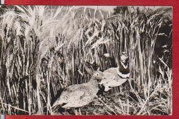 MUZEUL DE STIINTE GALATI BIRD BIRDS OTIS TETRAX ORIENTALIS ROMANIA POSTCARD UNUSED - Romania