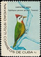 Cuba. 1970. Cuban Green Woodpecker    Pic Poignardé. ** - Climbing Birds