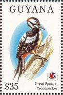 Guyana. 1994. Great Spotted Woodpecker  Pic épeiche. - Climbing Birds