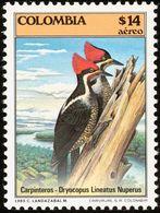 Colombie. Columbia 1985  Pic Ouentou (Dryocopus Lineatus) - Climbing Birds