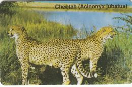 Namibia Cheetah - Superb Used - Namibia