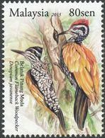 Malaysia. 2013 . Common Flameback    Pic à Dos Rouge - Climbing Birds
