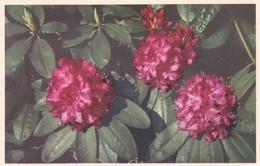 FLOWERS FLORES FLEURES. VALENTINE & SONS LTD.-TBE-BLEUP - Bloemen