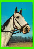 CHEVAUX - HORSES - KRUGER - - Chevaux