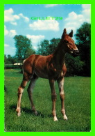 CHEVAUX - HORSES - POULIN -  KRUGER - - Chevaux